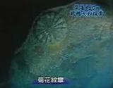 海底に眠る大和の船首.jpg